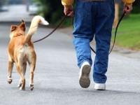 Где прогуливаться людям, а где — собакам?