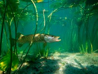 Водоемы есть, а рыбы нет