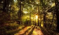 Юбилейный год лесхоза