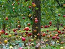 Яблоко — символический знак