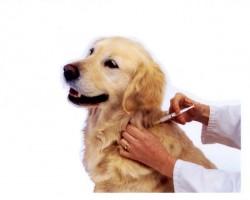 Предохранит прививка и бдительность